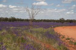 Field of Wildflowers (Medium)