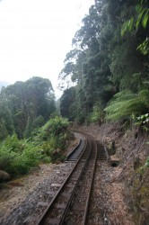 130314 ABT Railway and Rainforest
