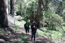 20131103 Walk around Lake Guy Bogong Med