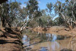 20140628-Beechal Creek at Our Camp on Aldville Med