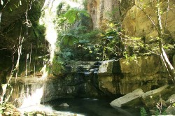20140808-Moss Garden Waterfall at Carnarvon Med