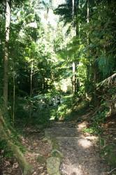 20150818 Lyrebird Walk Mt Warning NP Low