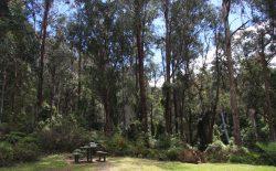 20161024-goodenia-rainforest-picnis-area-med