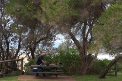 20161025-picnic-at-haycock-pt-ben-boyd-np-med