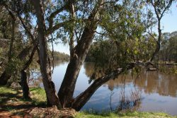 20161110-looking-toward-camp-16-swan-hill-med