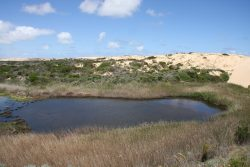 20161123-coorong-fresh-water-lake-med