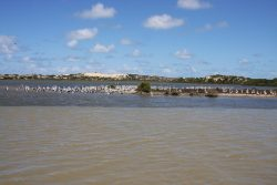 20161123-coorong-pelicans-and-meeting-of-salt-and-fresh-water-med