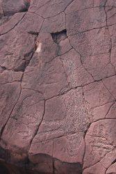 20170719-4069 Emu Rock Art Mutawintji Med