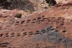 20170719-4083 400 Million Year Old Scorpion Track Med