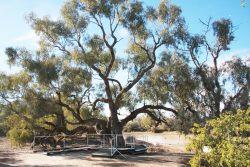 20170727-4161 The Dig Tree Med