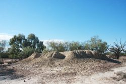 20170731-4172 Mud Mound Spring near Eulo Med