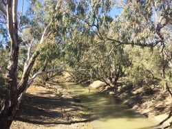 20170817-0626 MacQuarie River Med