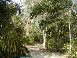 road-to-eurimbula-np