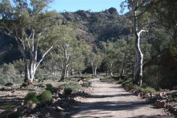 flinders-ranges-2-023-medium