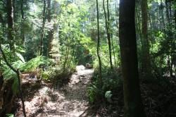 130307 Rainforest Walk Arthur River