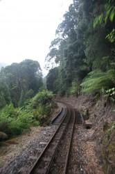 130314 ABT Railway and Rainforest
