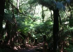 130329 St Columba Falls Walk Med