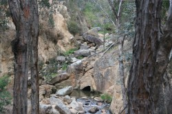 Eroded Reedy Creek and Tunnel Med