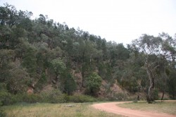 20131108  Terarra Creek Picnic Area Nangar NP #2 Med