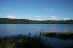 20140723-Lake Barrine Med