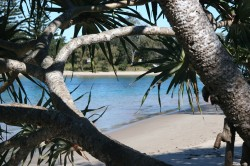 20150806 Pandanas Palm at Sandon River Med