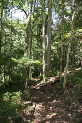 20161024-goodenia-rainforest-walking-track-med