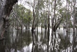 20161111 Camp 20 Across Murrumbidgee in Flood Med