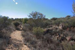 20170717-4054 Flora Walk in Living Desert Med