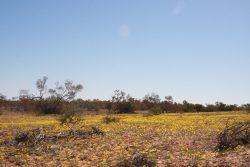 20170727-4166 Desert Flowers Med